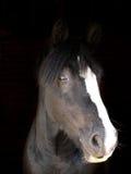 Черная съемка головки лошади Стоковая Фотография RF
