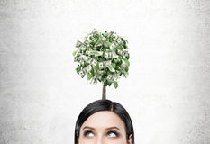 Черная с волосами коммерсантка, дерево доллара Стоковое Изображение