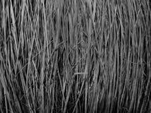 Черная текстура веника Стоковые Изображения