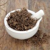 Черная трава корня Cohosh Стоковые Фотографии RF
