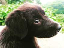 Черная фотография щенка стоковая фотография