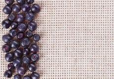 черника fruits серое полотно много стоковое изображение