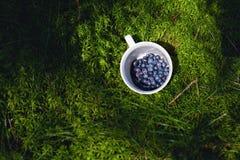 Черники в чашке Стоковые Изображения RF