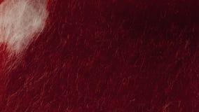 Чернила капания на ткани сток-видео