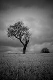 Черное белое унылое атмосферическое дерево в сельской местности Стоковое Изображение