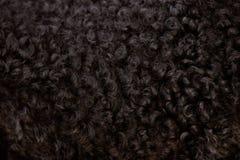 Черное курчавое мех Стоковое фото RF