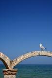 черное море чайки Стоковая Фотография