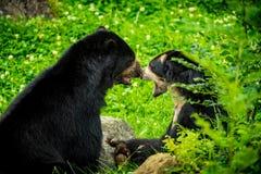 Черное назначение Stubenberg am Австрии Steiermark Herberstein Штирии медведей туристское видит стоковая фотография rf
