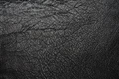 черное несенное кожаное стоковые фотографии rf
