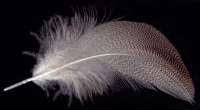 черное перо Стоковая Фотография RF