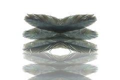 Черное перо Стоковая Фотография