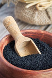 Черное семя тимона Стоковое Фото