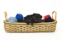 черное усаживание котенка Стоковые Фото