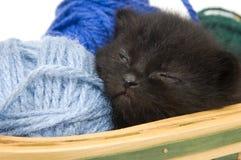 черное усаживание котенка Стоковая Фотография RF