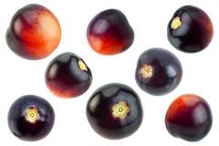 Черное фиолетовое собрание томатов вишни Стоковое Изображение RF