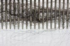 черное чистя щеткой newfounland волос собаки гребня Стоковые Изображения RF