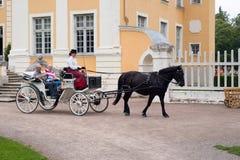 Черное hourse с колесницей Стоковое Изображение
