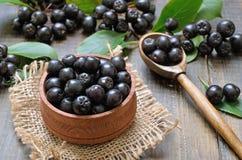Черное melanocarpa Aronia chokeberry стоковое фото