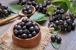 Черное melanocarpa Aronia chokeberry стоковая фотография