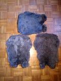 черное rabhitskin стоковые изображения rf