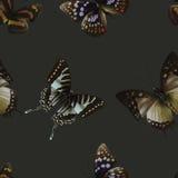 Чернота 06 бабочки безшовная Стоковое Изображение RF