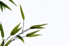 чернота бамбука Стоковые Фото