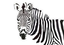 Чернота & белизна портрета дизайна искусства вектора зебры следуя иллюстрация штока