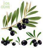 чернота выходит оливки бесплатная иллюстрация