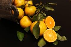 Чернота изолята плодоовощ мандарина Стоковая Фотография RF
