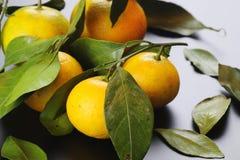 Чернота изолята плодоовощ мандарина Стоковая Фотография