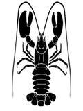 Чернота Омара на белой предпосылке иллюстрация вектора