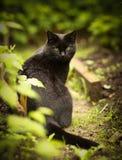 Чернота она фото кота близкое поднимающее вверх внешнее Стоковая Фотография