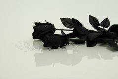 чернота подняла Стоковые Фото
