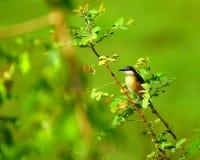 чернота птицы Стоковые Фотографии RF