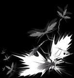чернота цветет диез Стоковые Изображения RF