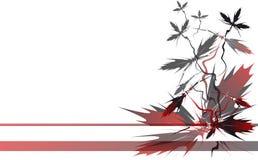 чернота цветет красный диез Стоковое Изображение RF