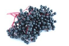 чернота ягод Стоковые Фотографии RF