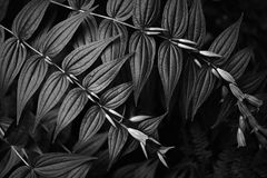 Чернота Стоковое Фото