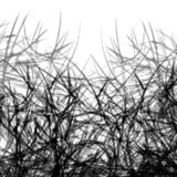 Черно-белая абстрактная предпосылка с линиями теней ветвей заводов стоковое фото