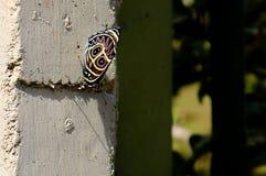Черно-белая бабочка Стоковые Фотографии RF