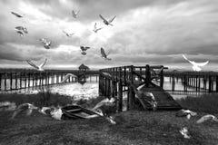 Черно-белая группа в составе птицы голубя летая над озером на деревянном Стоковые Изображения