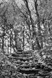 Черно-белая дорога ландшафта в парке осени стоковое фото rf