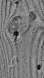 Черно-белая древесина Стоковое Изображение