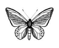 Черно-белая иллюстрация вектора бабочки Эскиз насекомого руки вычерченный Детальный графический чертеж коричневого цвета стены в  иллюстрация вектора