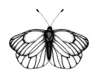 Черно-белая иллюстрация вектора бабочки Эскиз насекомого руки вычерченный Детальный графический чертеж черной veined белизны внут бесплатная иллюстрация