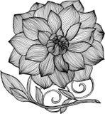 Черно-белая иллюстрация пиона Элегантность линий иллюстрация штока