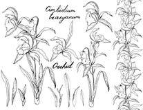 Черно-белая орхидея бесплатная иллюстрация