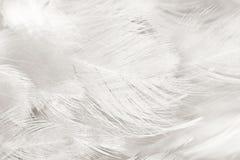 Черно-белая предпосылка текстуры пера Стоковое Изображение
