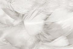 Черно-белая предпосылка текстуры пера Стоковые Изображения RF