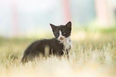 Черно-белая сварливая унылая киска Стоковое Фото